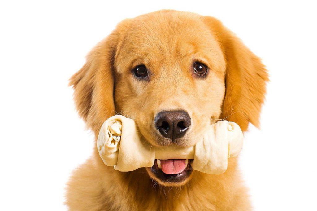 Suggerimenti per la cura degli animali domestici